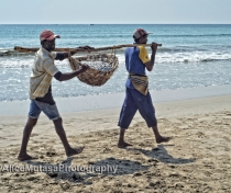 Uppuveli beach - carrying some of the day's catch home or to market