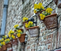Canalside flowers