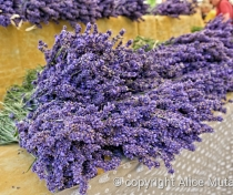 Lavender on sale in Sault village market
