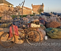 Bicycle and fishing nets - Essaouira port