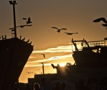 Essaouira harbour at sunset