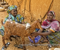 Mama & Ami washing one of the goats