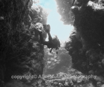 St Johns Reefs Red Sea 2015_017