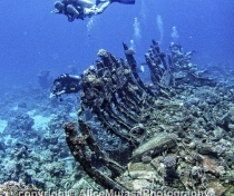 St Johns Reefs Red Sea 2015_054