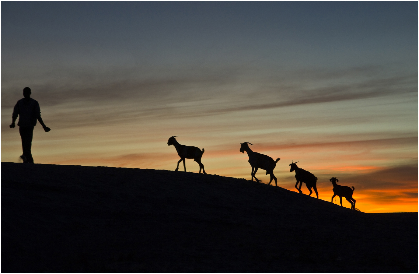 Sunset silhouette of goats and goatherd on sand dune, Sahara desert – by Alice Mutasa