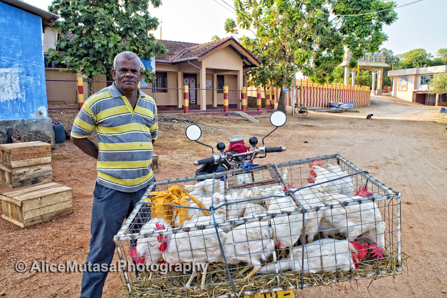 A guy I met selling chickens from his motorbike