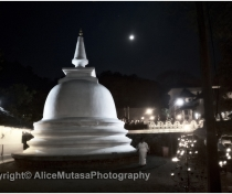 Full moon 'Vesak' puja for the Buddha's birthday at the Temple of the tooth, Kandy