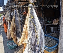 Fish shops in Trincomalee
