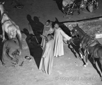 Horse being shoed in the middle of a busy road in Luxor
