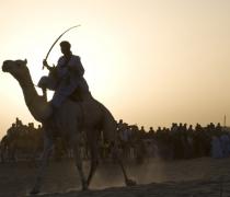 Camel races - Festival au Desert / Festival in the Desert - Timbuktu, Mali