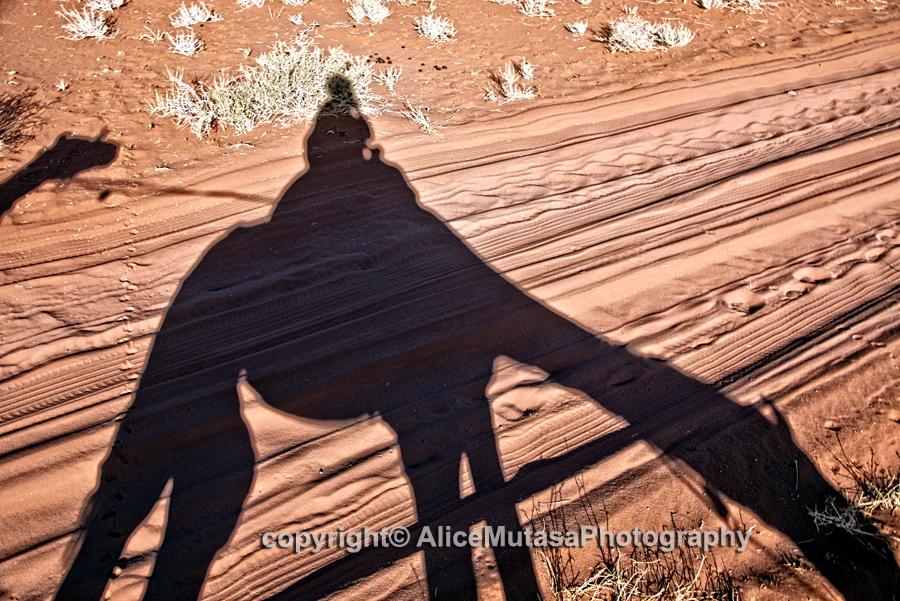 Camel eating shadow