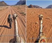 Camel ride - Wadi Rum