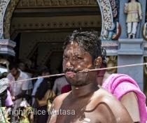 Thaipoosam Cavadee Tamil festival - at Tamil Surya Oudaya Sangam Temple - Grande Baie