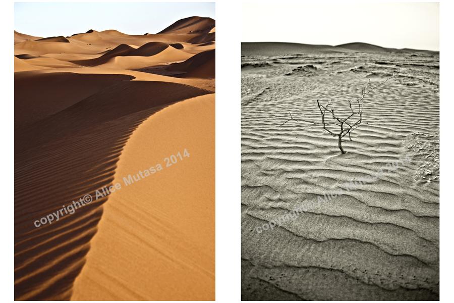 Sahara 08 - Erg Chigaga