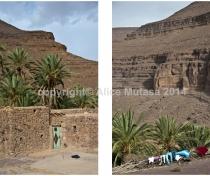 Oasis de l'Oued Naougoum