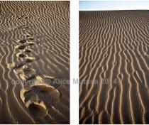 Sahara sand lines #1