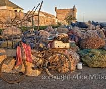 Bicycle and fishing nets - Essaouira port