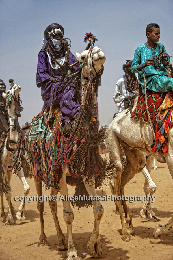 Touaregs and camels