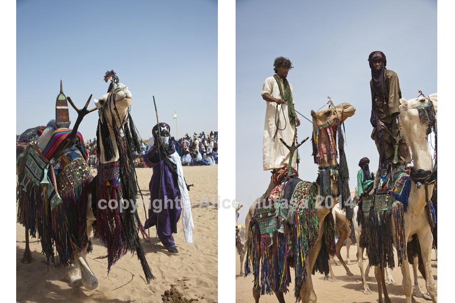 Camel dressage contest