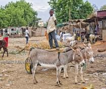 Niamey animal market / Marché de bétail, Niamey