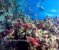 'Wrecks and Reefs' trip on Emperor Superior