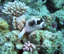 St Johns Reefs Red Sea 2015_004