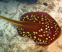 St Johns Reefs Red Sea 2015_023