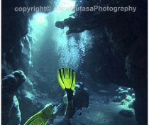 St Johns Reefs Red Sea 2015_024
