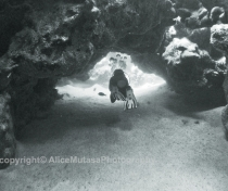 St Johns Reefs Red Sea 2015_026