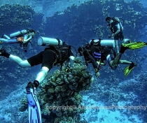 St Johns Reefs Red Sea 2015_032_V3