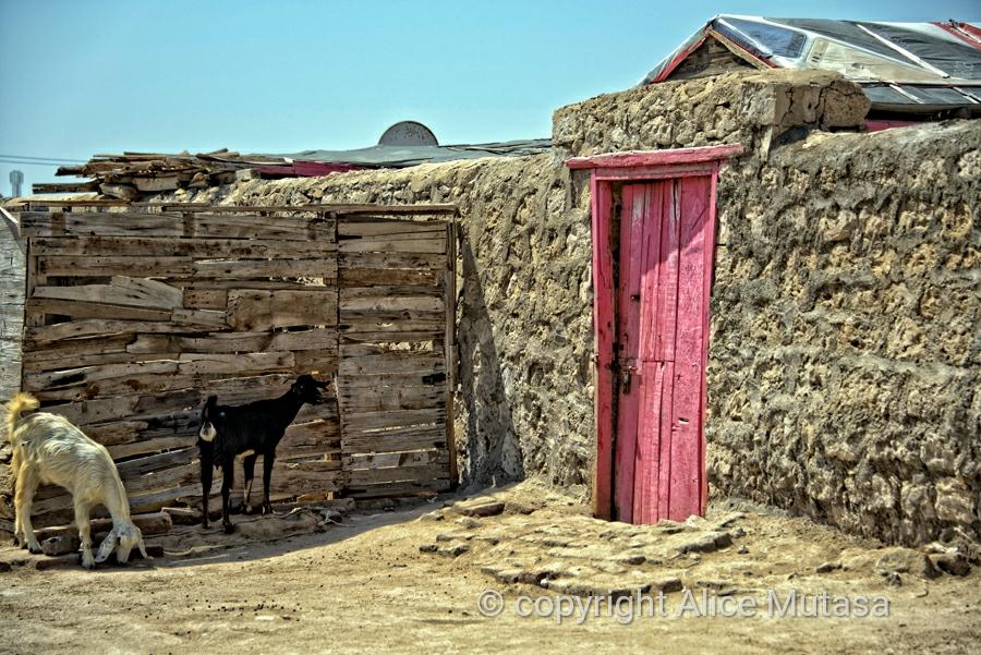 Pink door & goats, Suakin
