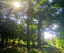 Downhills Park woods