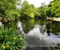 Tottenham Cemetary lake